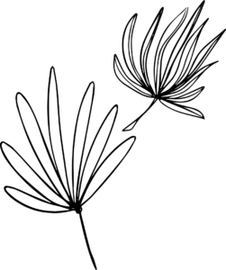 maxpier solar line